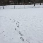 真冬のミシガン旅
