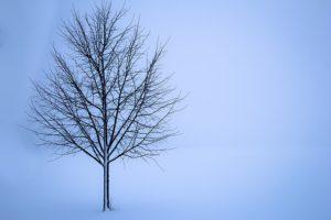 tree-1056598_640
