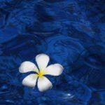 サロンの必需品、ヒーリングミュージック ―ウブドの癒し