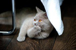 cat-1598412_640