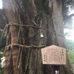 御嶽神社の「安産杉」にお参りしてきました☆