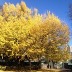そよそよ周辺の楽しいスポット【その③】有栖川宮記念公園